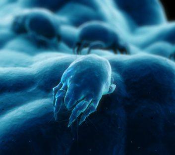 Un environnement de moins de 50% d'humidité tue les acariens.