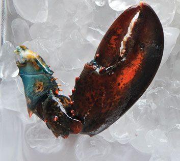 Pince de homard