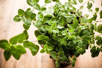 Les herbes peuvent vous aider à lutter contre l'inflammation.