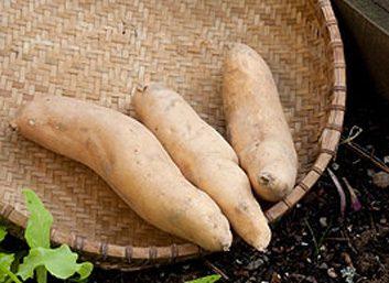 Envie de ceci?: Purée de pommes de terre.