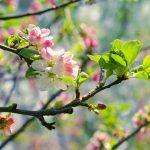 Rhume des foins: les 9 meilleurs remèdes