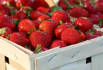 Consommer des fraises pourrait prévenir les complications dues au diabète de type 1.