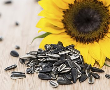 Chanvre, sésame et tournesol : les meilleurs grains pour la santé!