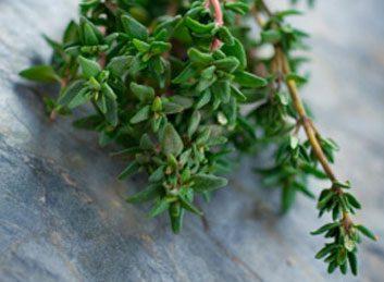 Les herbes sont riches en antioxydants.