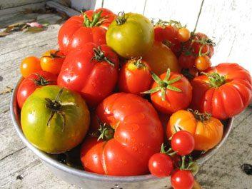Tomate raisin