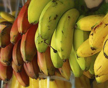 Les bananes ont différentes couleurs