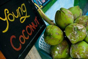Jeune noix de coco