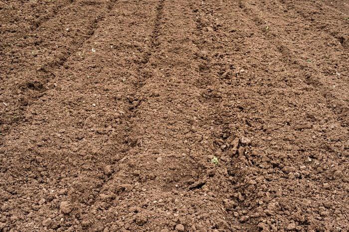 Trompez les mauvaises herbes avec de faux semis