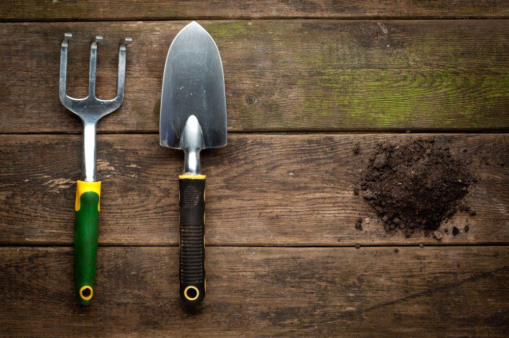 Sarcler régulièrement pour éliminer les herbes nuisibles