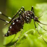 Piqûres d'insectes: symptômes, maladies et personnes à risque