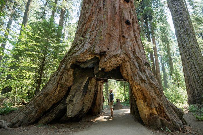Le parc national de Sequoia en Californie