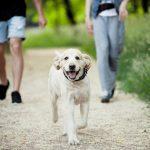 Marcher : les vertus santé de la marche