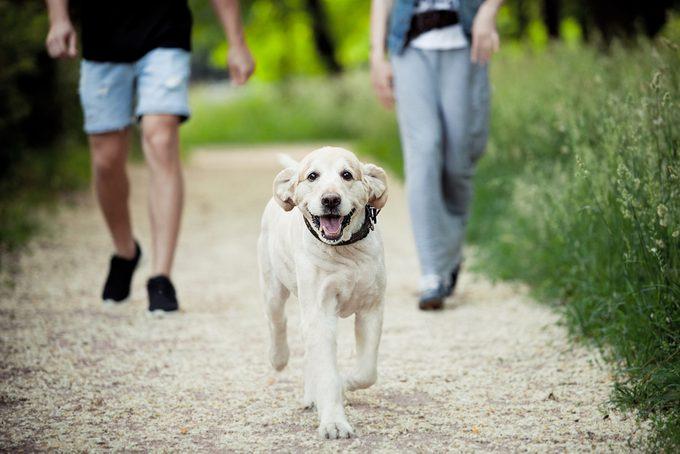 Découvrez les nombreuses vertus santé de la marche.