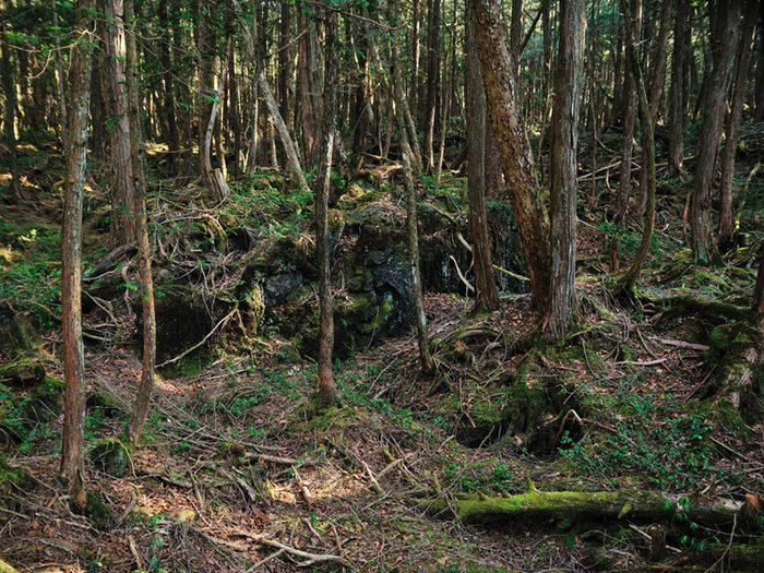 Monuments mystérieux: la forêt d'Aokigahara au Japon.