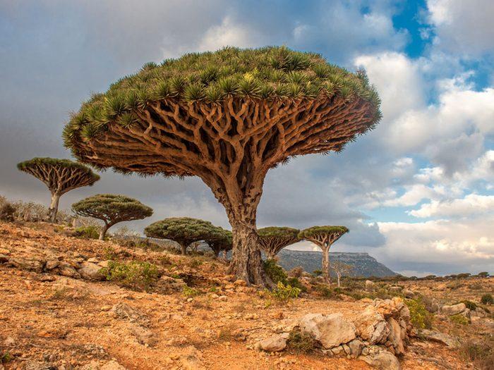 Monuments mystérieux: Socotra au Yémen.