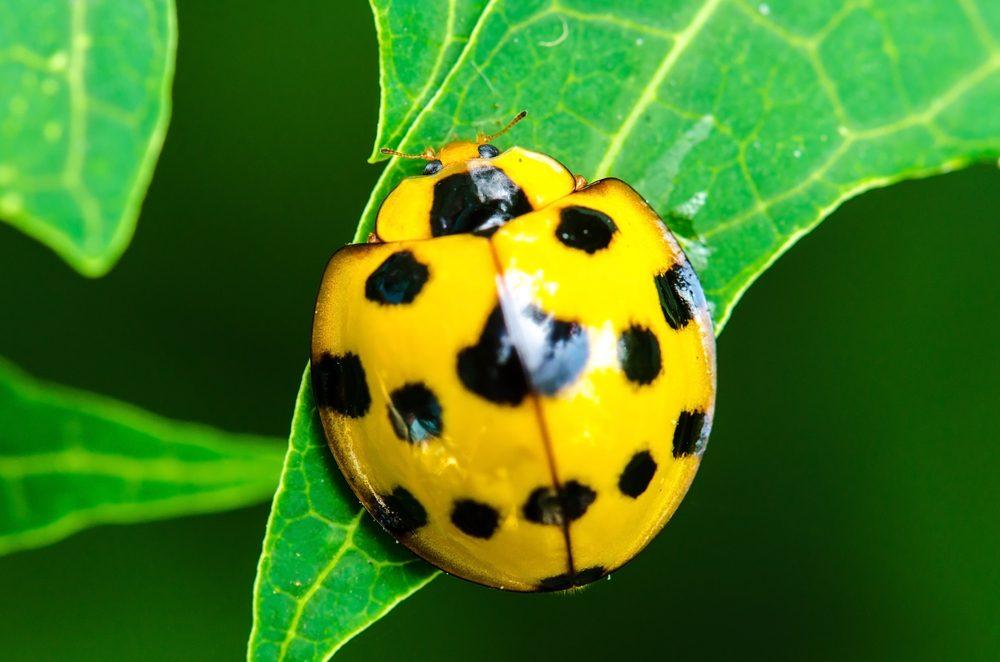 Faites pousser vos légumes en hauteur pour vous protéger des animaux et insectes.