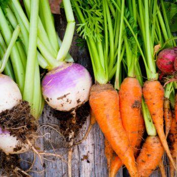 Conseils de jardinage et trucs pour le potager!