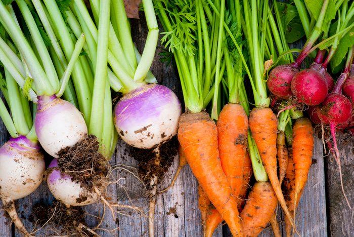 Le meilleur type de terre pour un potager? Un sol riche en nutriments.