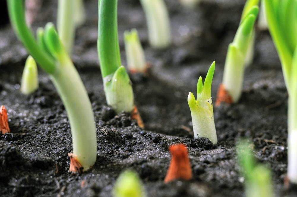 25 conseils de jardinage et des trucs pour le potager
