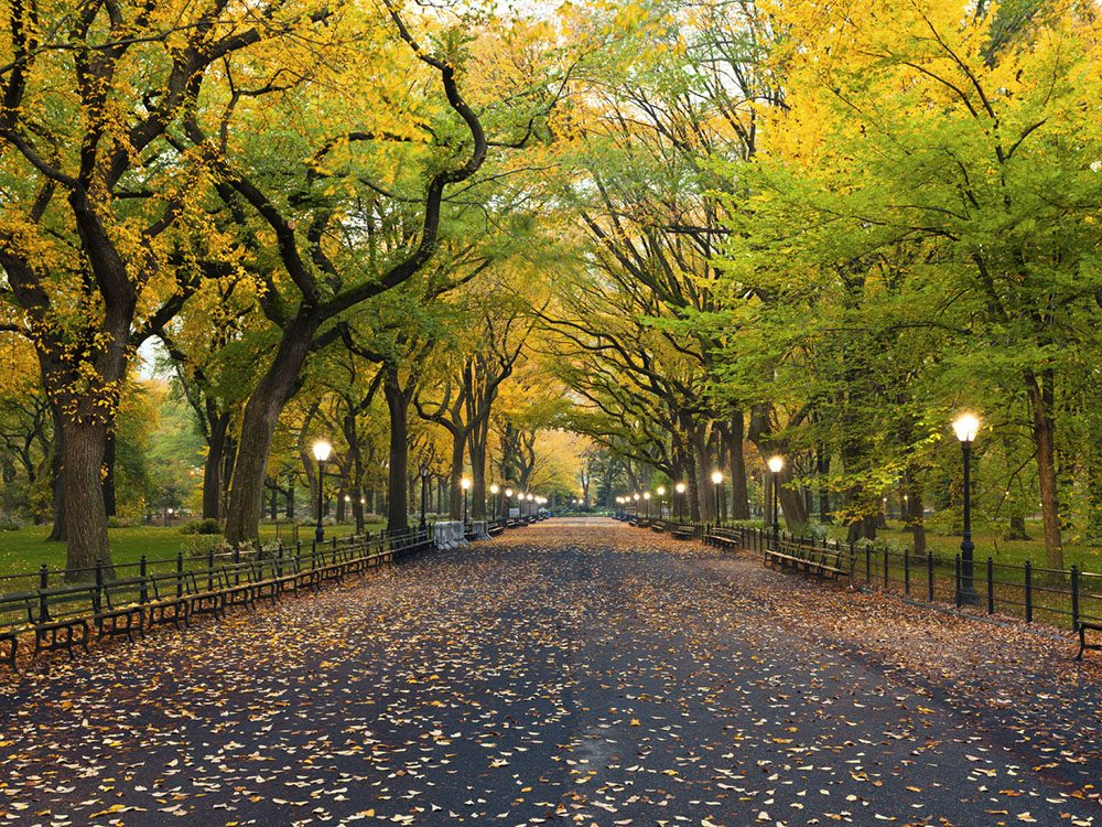 Quoi faire à new york: se promener à Central Park.