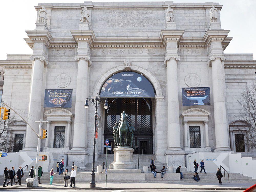 Quoi faire à new york: visiter le musée d'histoire naturelle.
