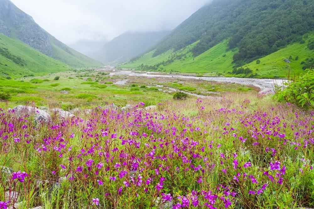 Le parc national de la Vallée des fleurs en Inde