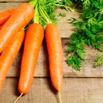 Les vertus de la carotte
