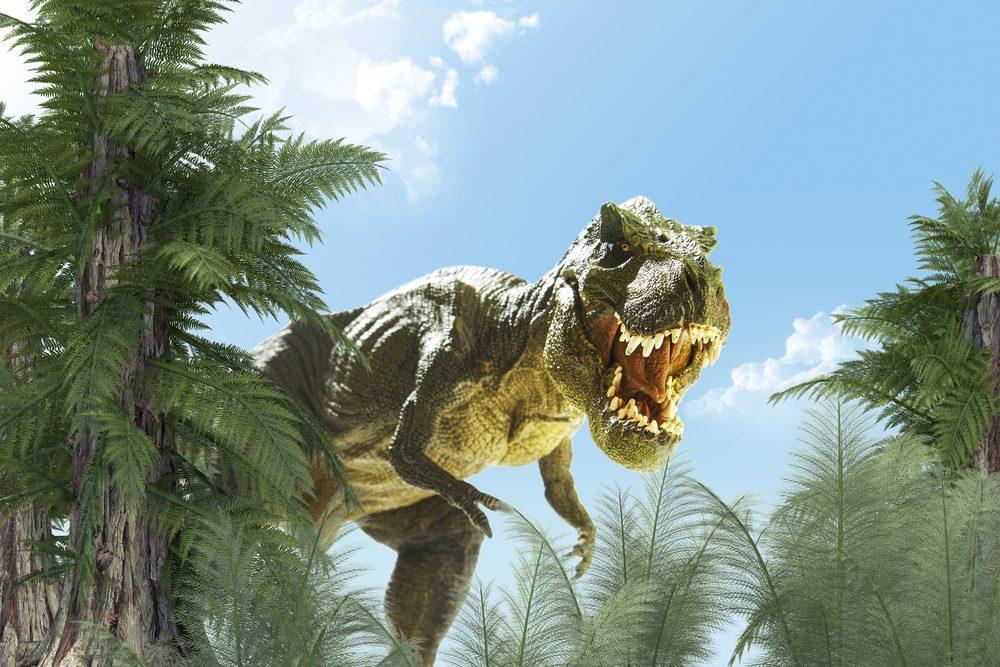 Les dinosaures et les humaines n'ont jamais cohabité.