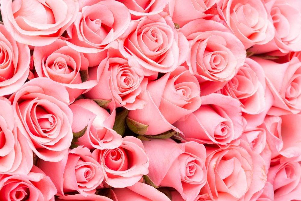 Rose: pour communiquer la tendresse et la gratitude