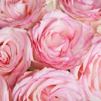 Bouquet de roses rouges ou blanches? Découvrez la signification des couleurs