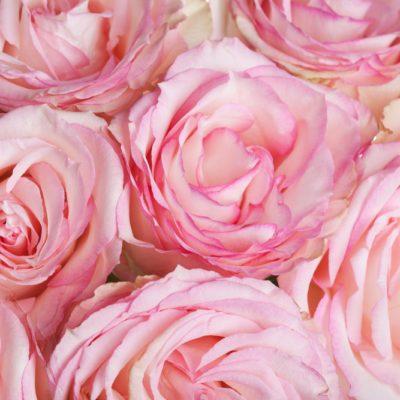 Sens des roses et signification des fleurs populaires.