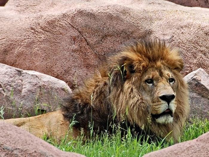 Parmi les attractions touristiques de Toronto, il y a le zoo.