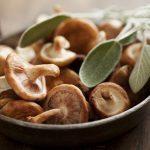 Champignons médicinaux asiatiques: les bienfaits des shiitake