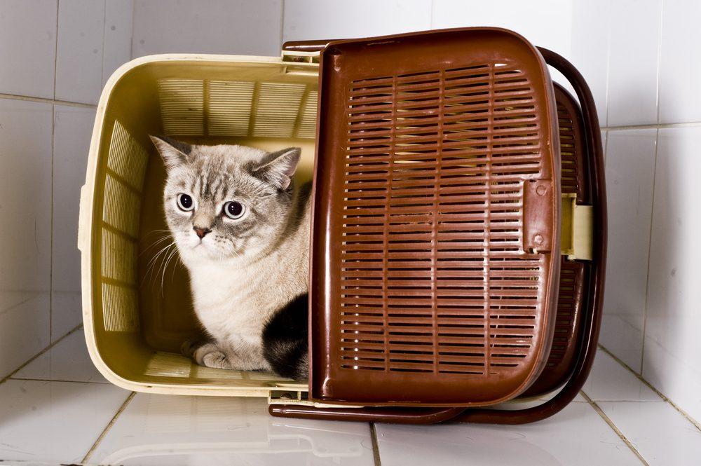 Votre chat n'arrête pas de miauler car il est angoissé