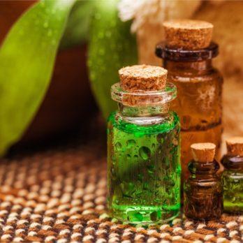 Arbre à thé: l'huile essentielle aux nombreux bienfaits et vertus