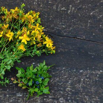 Millepertuis : une plante aux nombreuses vertus
