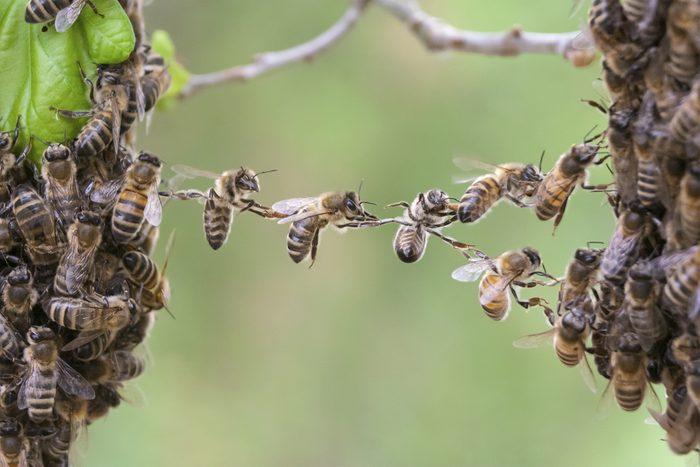 Que faire dans le cas d'une piqure d'abeille