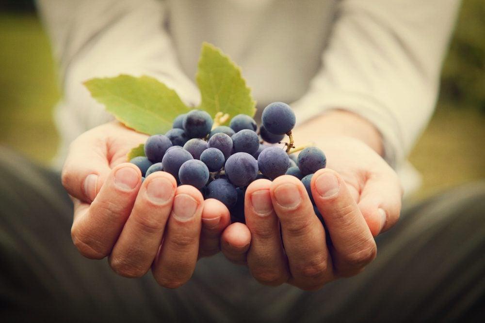 L'extrait de pépins de raisin pour protéger contre les radicaux libres.