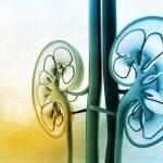 Maladies de reins: des suppléments et habitudes pour les prévenir