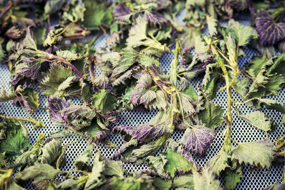 Les meilleures plantes pour guérir l'eczéma.