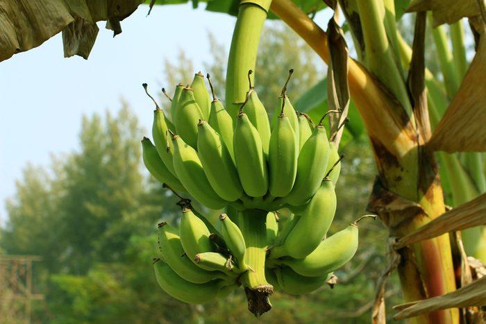 La vérité sur les bananes