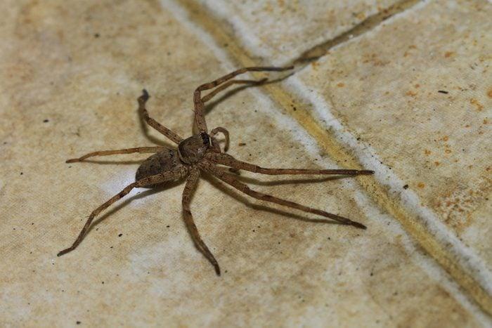 La vérité sur le fait d'avaler une araignée en dormant