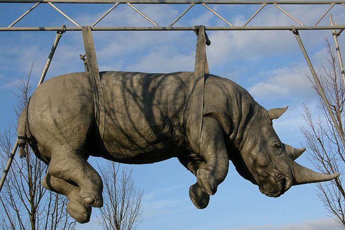 Attraction touristique bizarre: le rhinocéros suspendu de Luisenplatz.