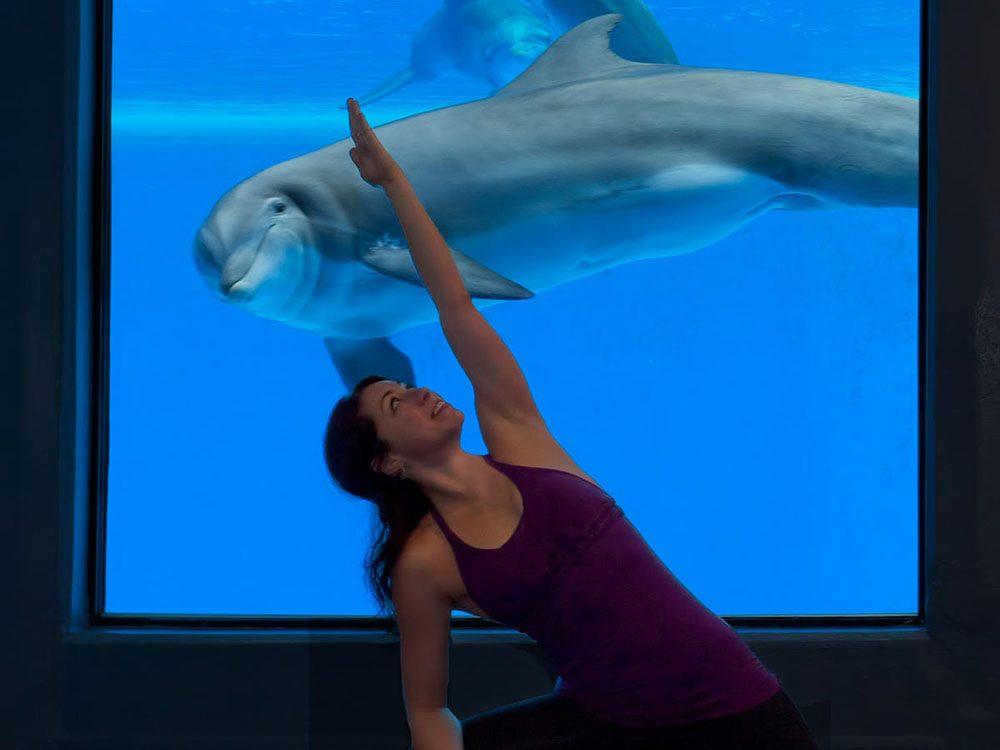 Parmi les offres étranges dans les hôtels, le Mirage propose de cours de yoga devant des dauphins.
