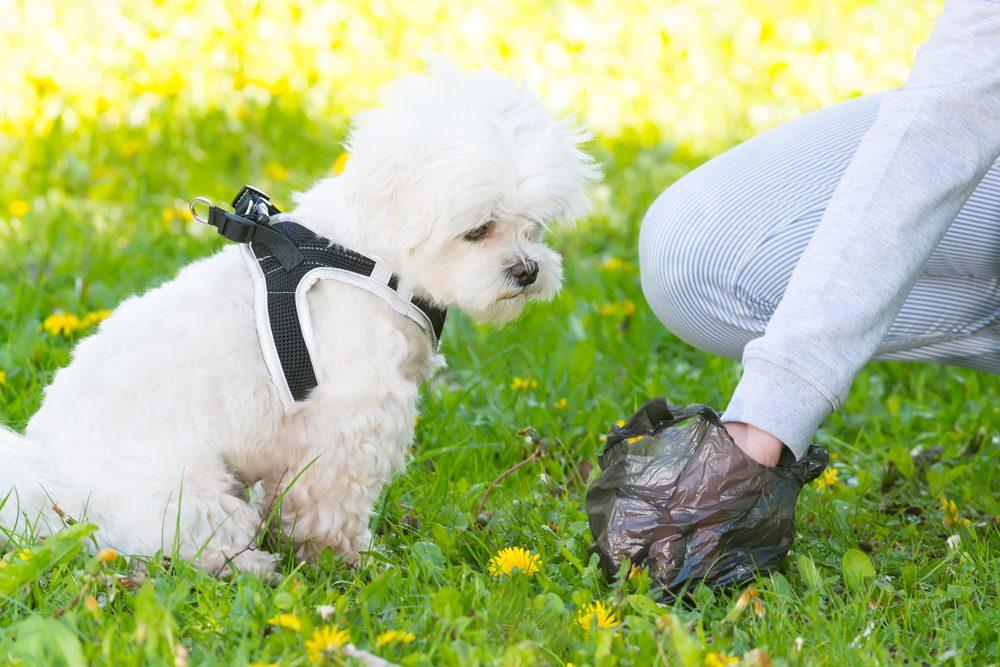 Politesse et étiquette: Nettoyez après votre chien.