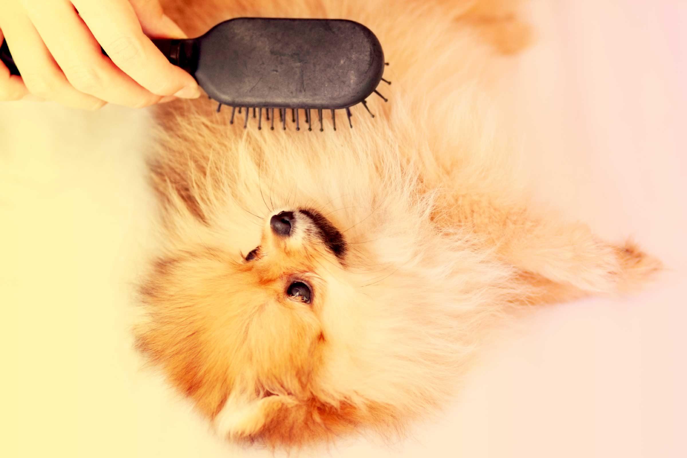 Brosser régulièrement les animaux pour ramasser les poils.