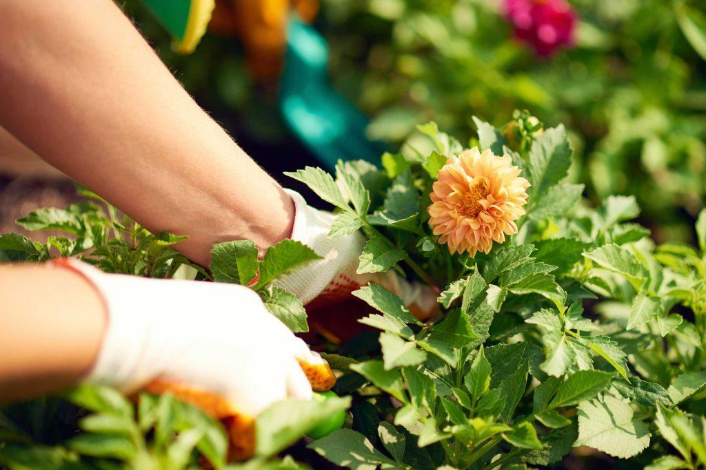 Truc anti-cancer pour prévenir le cancer: jardiner.
