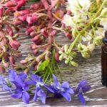 Florithérapie: transformer ses pensées négatives