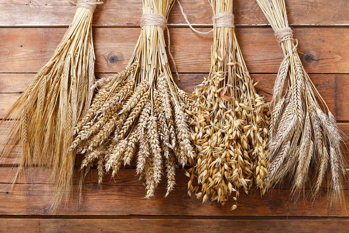 Le gluten est contenu dans le blé, l'orge et le seigle.