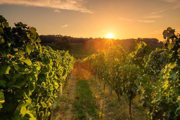 Route des vins : Visitez le vignoble de la Chapelle Sainte-Agnès.